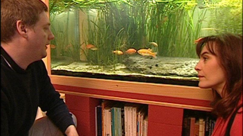 Ko goldfische for Goldfisch haltung im teich