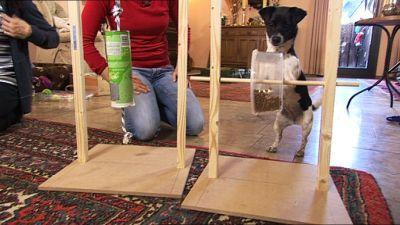 fully 3x haustier welpen kauknochen hunde katze spielzeug zerrspielzeug kauspielzeug. Black Bedroom Furniture Sets. Home Design Ideas