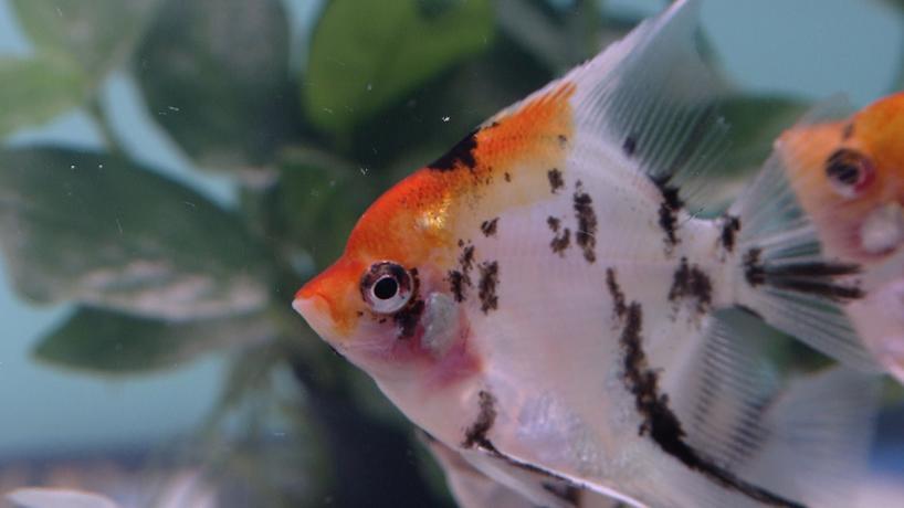 die zehn beliebtesten aquariumfische