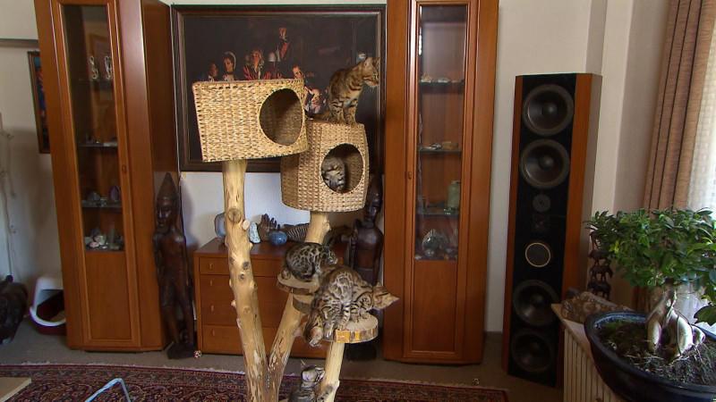 anleitung f r einen do it yourself naturkratzbaum. Black Bedroom Furniture Sets. Home Design Ideas
