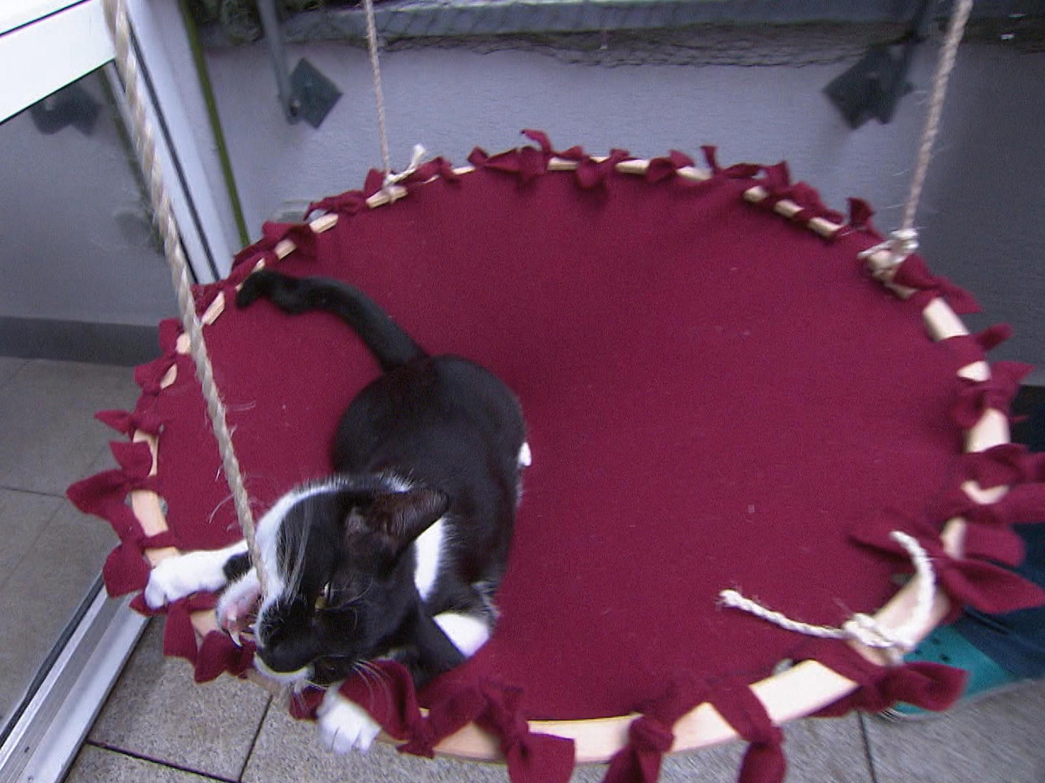 hundkatzemaus so einfach basteln sie eine h ngematte f r ihre katze. Black Bedroom Furniture Sets. Home Design Ideas