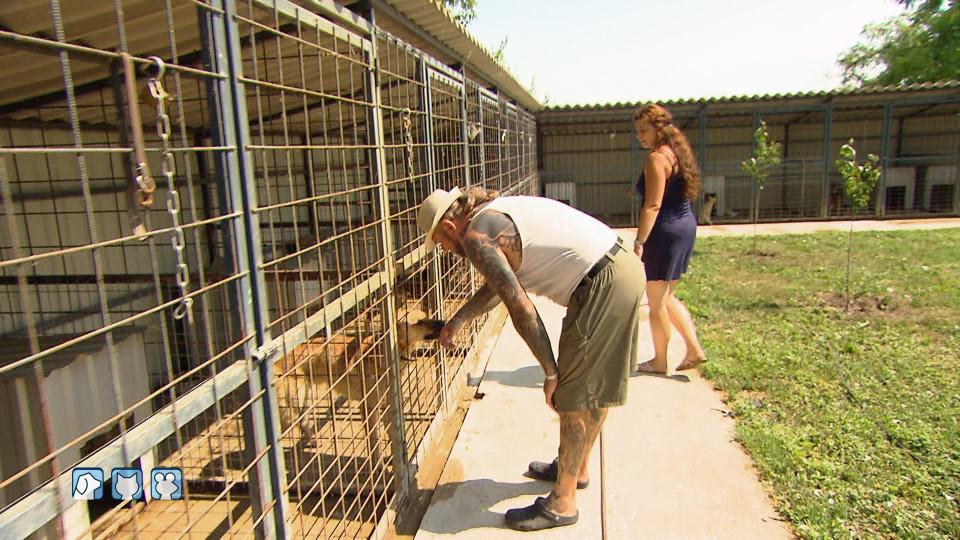 Hunde Ungarn Tötungsstation