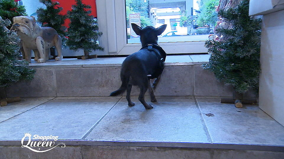 "Alonas Hund Jolie bei ""Shopping Queen""."