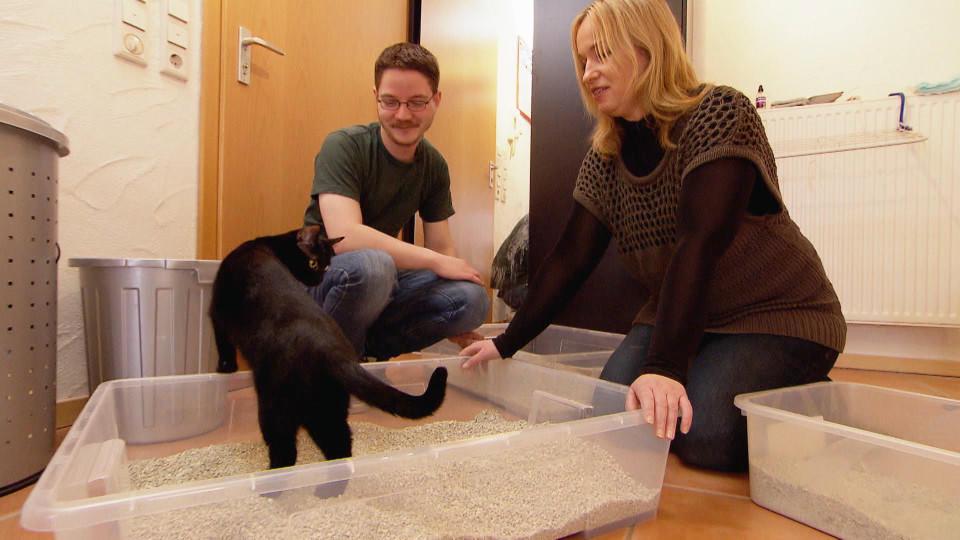 hundkatzemaus warum wird katze kasumi nicht mehr stubenrein. Black Bedroom Furniture Sets. Home Design Ideas