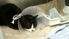 Lebensbedrohlicher Zustand von Katze Leila