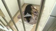 Röntgenuntersuchung für Schäferhund Spike