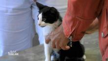 Katzenbaby mit Atemnot und Herzprobleme