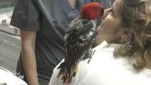 Papagei trauert um Herrchen